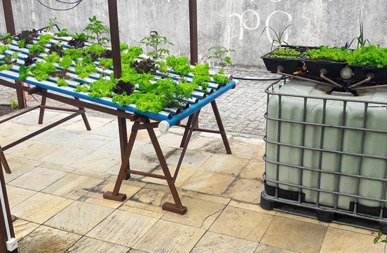 Semana do Meio Ambiente – live apresenta aquaponia em escala residencial